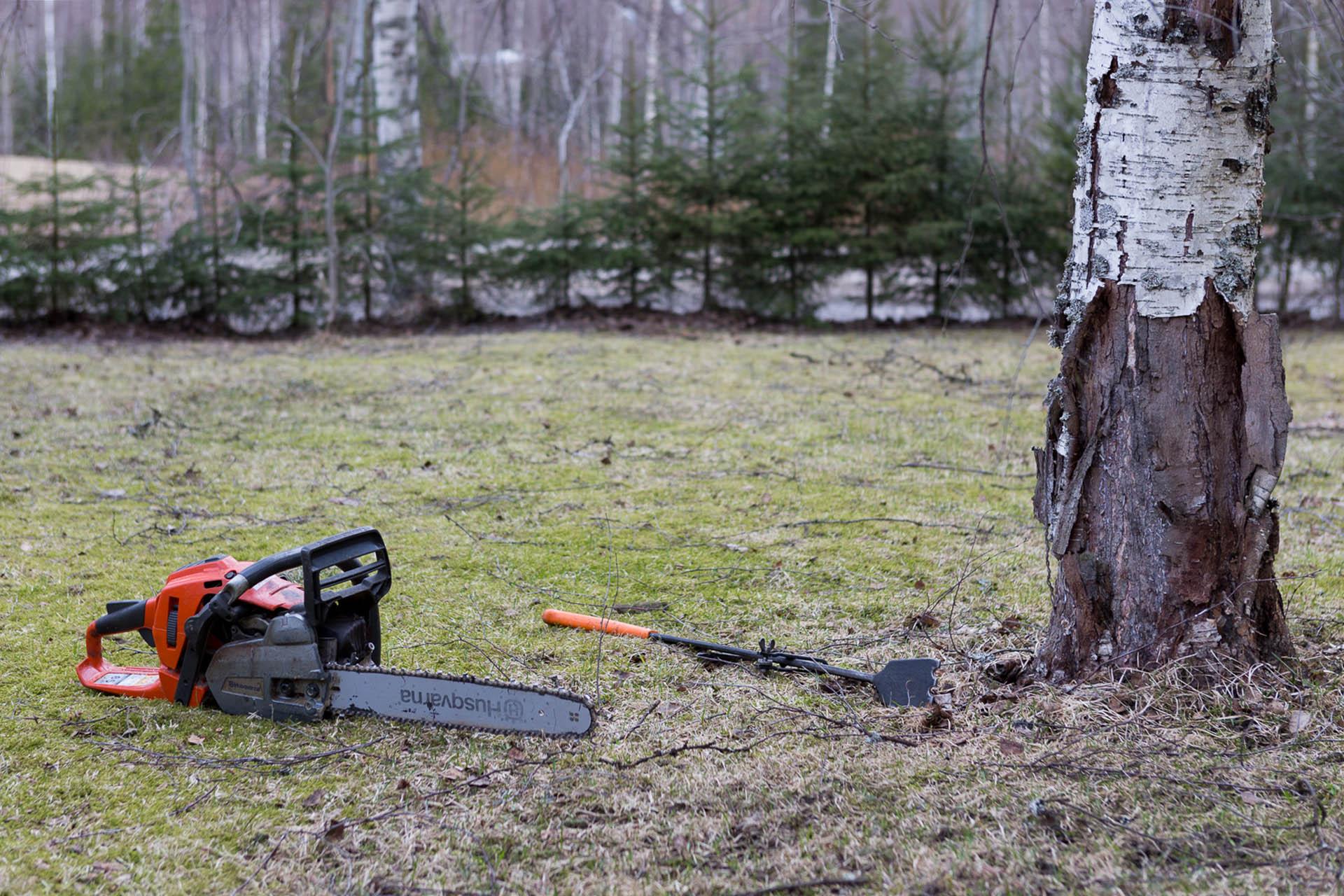 Metsänhoitotyö